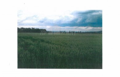 Photo #1: Arable land for auction in Trakovice